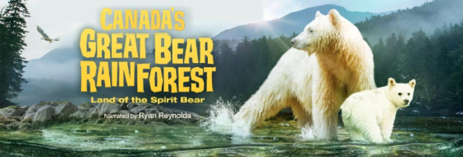 Canada's Great Bear Rainforest: Lights Up Sound Down 2D  Billboard Image